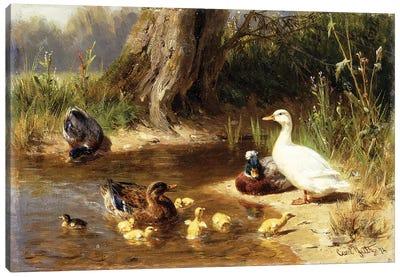 Ducks at the Water's Edge, 1874 Canvas Art Print