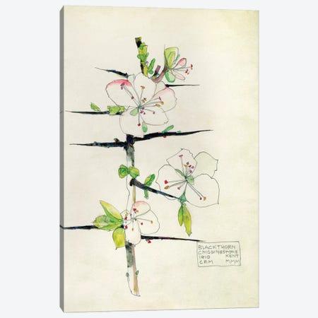 Blackthorn, Chiddingstone, Kent, 1910 Canvas Print #BMN9568} by Charles Rennie Mackintosh Canvas Wall Art