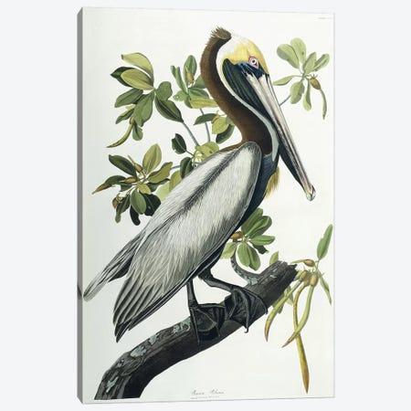 Brown Pelican, 1835  Canvas Print #BMN9662} by John James Audubon Canvas Art Print