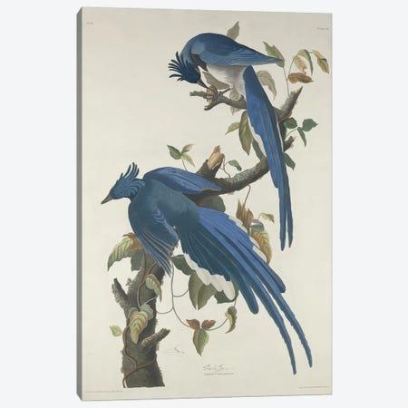 Columbia Jay, 1830  Canvas Print #BMN9663} by John James Audubon Canvas Art Print