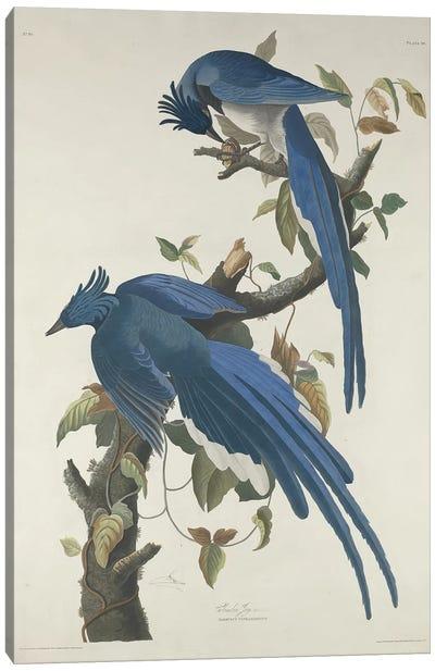 Columbia Jay, 1830  Canvas Art Print