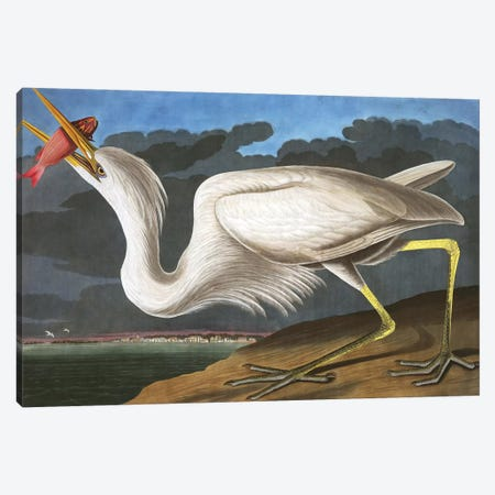 "Great White Heron, Ardea Occidentalis, from ""The Birds of America"" by John J. Audubon, pub. 1827-38  3-Piece Canvas #BMN9667} by John James Audubon Canvas Artwork"
