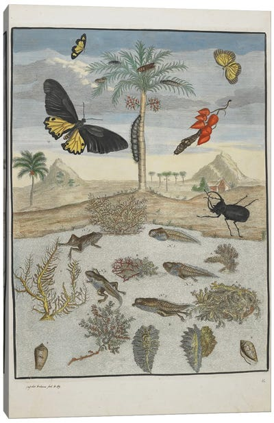Insects and Fish with Island Background, 1705-71  Canvas Art Print