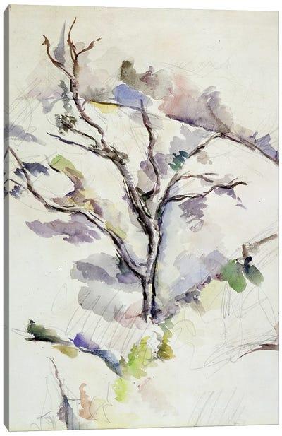 The Oak  Canvas Art Print