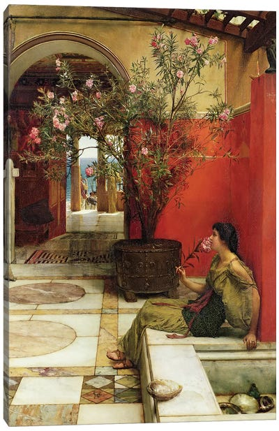 An Oleander, 1882  Canvas Art Print