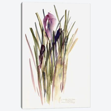 Crocus, 2003  Canvas Print #BMN9899} by Claudia Hutchins-Puechavy Canvas Artwork