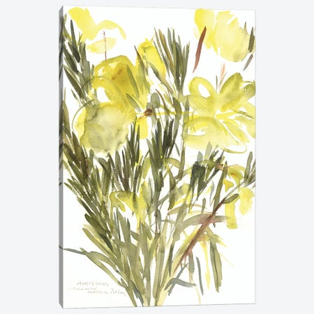 Evening primroses; 2004  Canvas Print #BMN9901} by Claudia Hutchins-Puechavy Canvas Wall Art