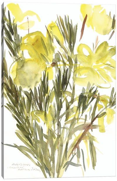Evening primroses; 2004  Canvas Art Print