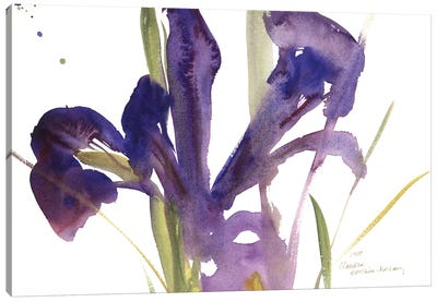 Iris, 1987  Canvas Art Print