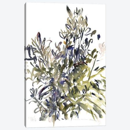 Senecio and other plants, 2003  Canvas Print #BMN9916} by Claudia Hutchins-Puechavy Canvas Art
