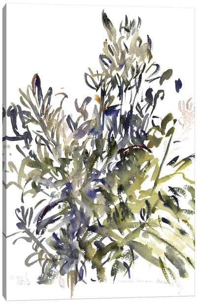 Senecio and other plants, 2003  Canvas Art Print