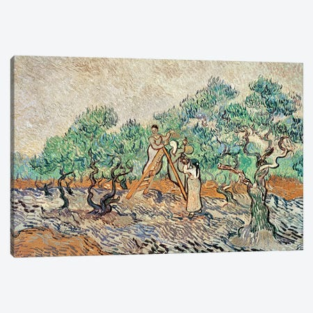 The Olive Orchard, 1889  Canvas Print #BMN991} by Vincent van Gogh Canvas Wall Art