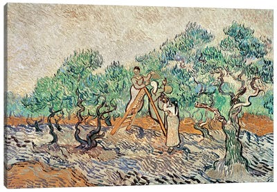 The Olive Orchard, 1889  Canvas Art Print