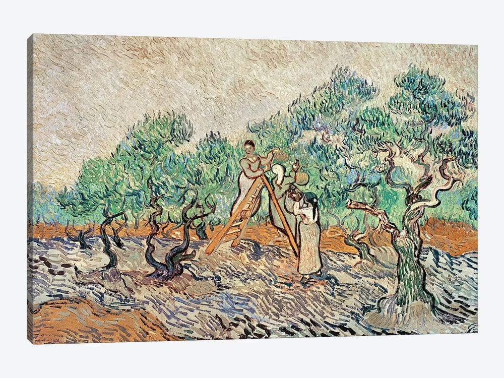 The Olive Orchard, 1889  by Vincent van Gogh 1-piece Canvas Print