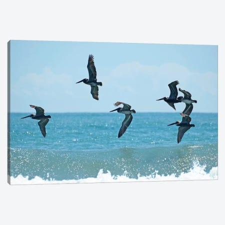 Pelican II 3-Piece Canvas #BNA34} by Bruce Nawrocke Canvas Art Print