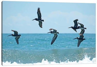Pelican II Canvas Art Print