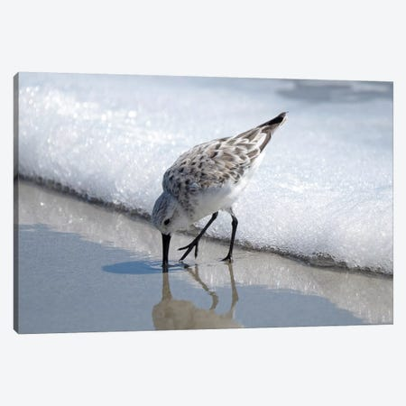 Sandpiper I Canvas Print #BNA39} by Bruce Nawrocke Canvas Art