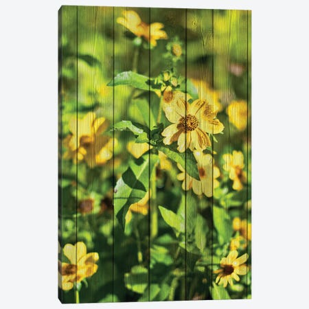 Daisies on Wood Canvas Print #BNA7} by Bruce Nawrocke Canvas Art