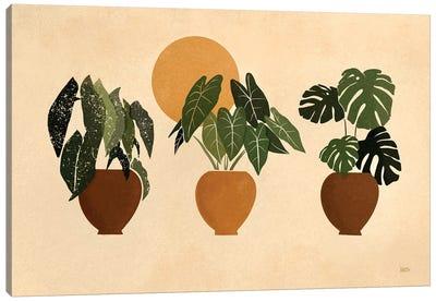 Houseplants II Canvas Art Print