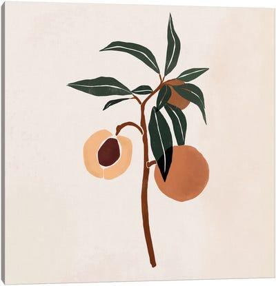 Peach Branch Canvas Art Print