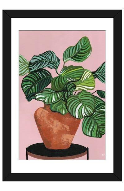 Calatheas Framed Art Print