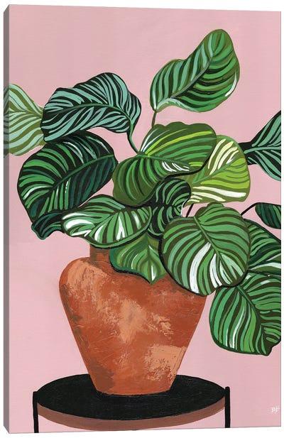 Calatheas Canvas Art Print