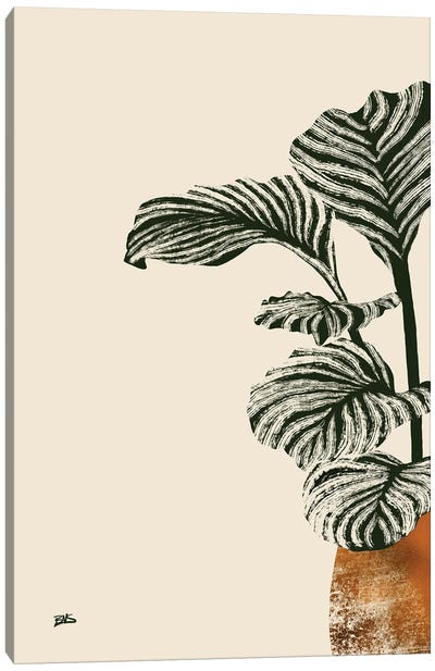 Calas I (bronze) Canvas Art Print