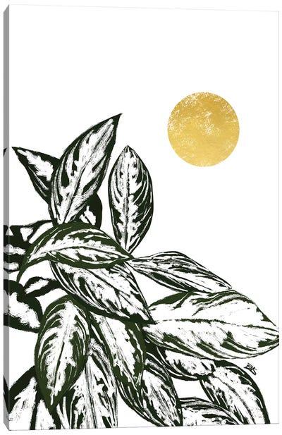 Calas II Canvas Art Print