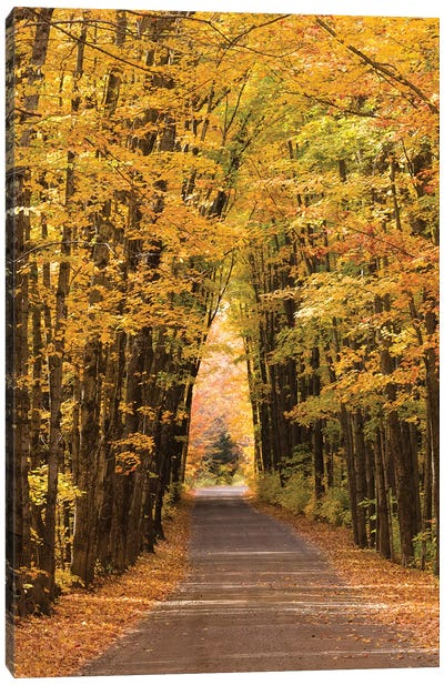 USA, Michigan. Trees lining Cathedral Road form a cathedral like shape overhead. Canvas Art Print