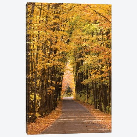 USA, Michigan. Trees lining Cathedral Road form a cathedral like shape overhead. Canvas Print #BND15} by Brenda Tharp Canvas Artwork