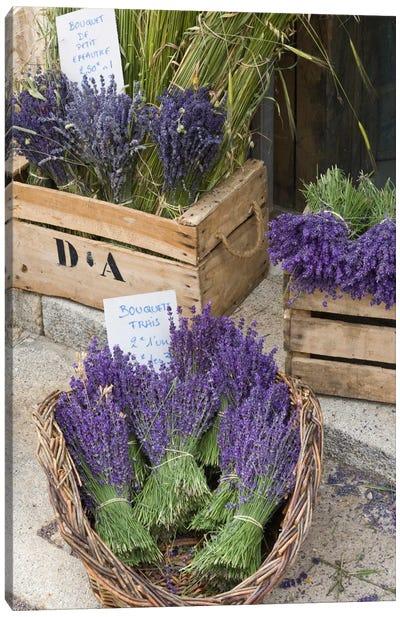 Harvested Lavender Bunches For Sale, Canton de Sault, Provence-Alpes-Cote d'Azur, France Canvas Art Print