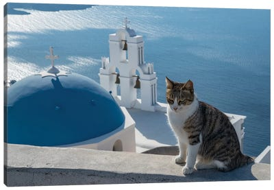 Greece, Santorini. Cat posing on the wall above the iconic Three Bells of Fira Canvas Art Print