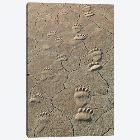 Footprints of and cub coastal grizzly bears in Lake Clark National Park, Alaska. Canvas Print #BND4} by Brenda Tharp Art Print