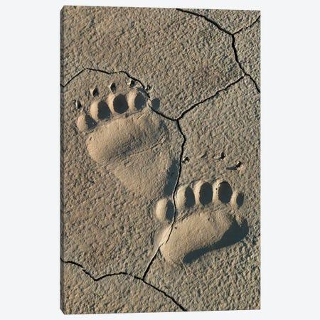 Footprints of coastal grizzly bear. Lake Clark National Park, Alaska. Canvas Print #BND5} by Brenda Tharp Art Print