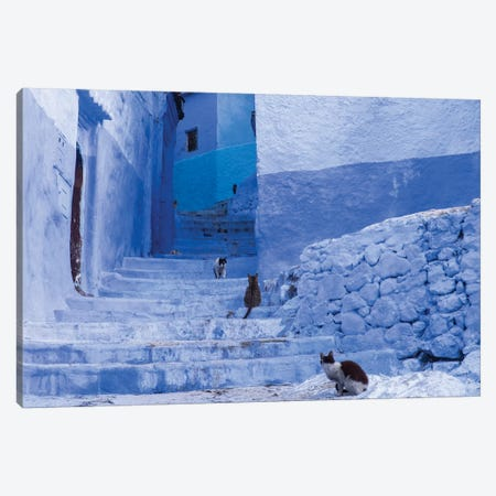 Morocco, Chefchaouen. Cats sit along the winding steps of an alley. Canvas Print #BND8} by Brenda Tharp Canvas Art