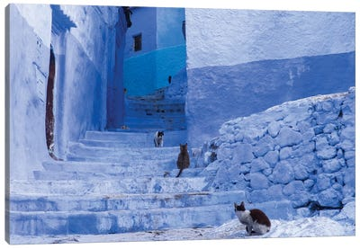 Morocco, Chefchaouen. Cats sit along the winding steps of an alley. Canvas Art Print