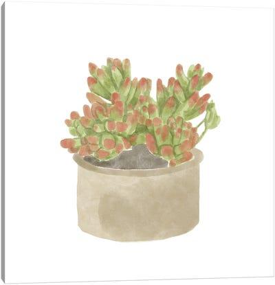 Simple Succulent I Canvas Art Print