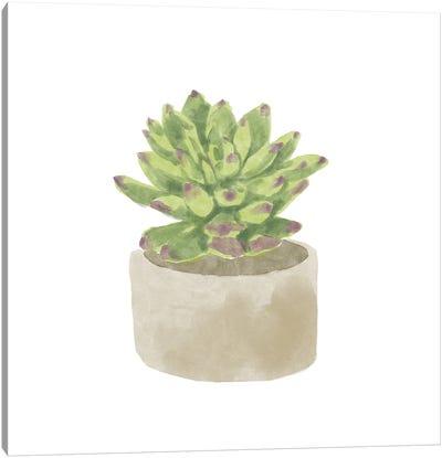Simple Succulent III Canvas Art Print
