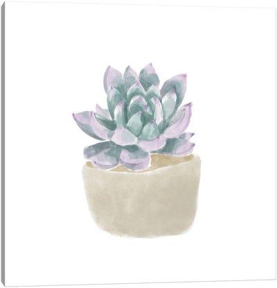 Simple Succulent IV Canvas Art Print