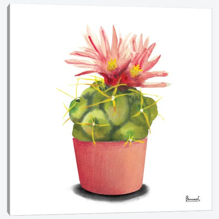 Cactus Flowers I Canvas Print #BNR1} by Bannarot Art Print