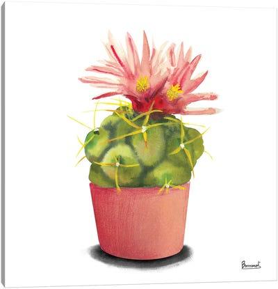 Cactus Flowers I Canvas Art Print
