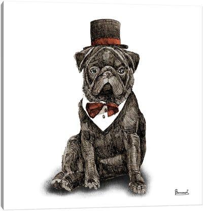Pugs in hats III Canvas Art Print