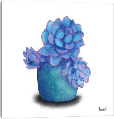Turquoise Succulents I Canvas Art Print