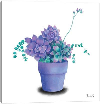 Turquoise Succulents II Canvas Art Print