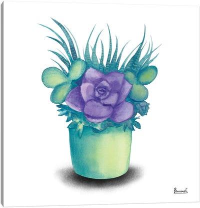 Turquoise Succulents III Canvas Art Print