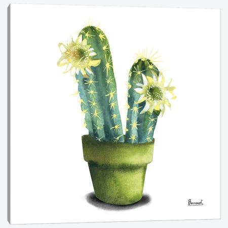 Cactus Flowers II Canvas Print #BNR2} by Bannarot Art Print