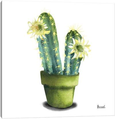 Cactus Flowers II Canvas Art Print