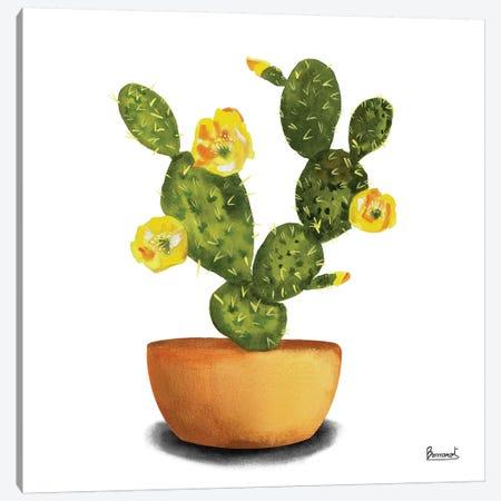 Cactus Flowers III Canvas Print #BNR3} by Bannarot Art Print