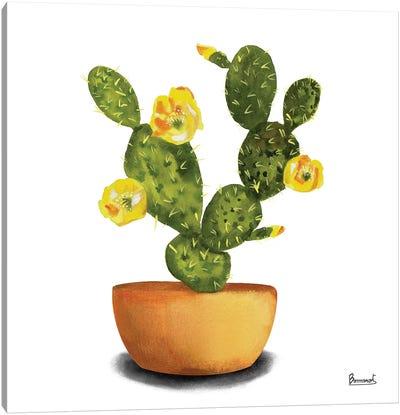 Cactus Flowers III Canvas Art Print