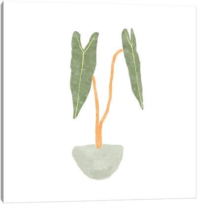 Philodendron Billietiae I Canvas Art Print